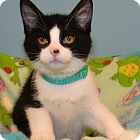 Adopt A Pet :: Finian - Cincinnati, OH