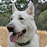 Adopt A Pet :: Zeus - Sunnyvale, CA