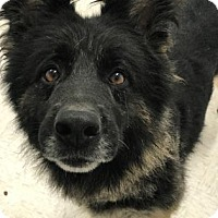 Adopt A Pet :: Barley - Binghamton, NY