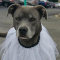 Adopt A Pet :: Princess Buttercup - Columbiana, AL