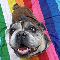 Adopt A Pet :: Brutus - Santa Ana, CA