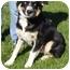 Photo 1 - Husky Mix Dog for adoption in Somerset, Pennsylvania - Steele