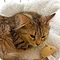 Adopt A Pet :: Lynx - Orillia, ON
