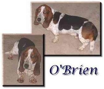 Basset Hound Dog for adoption in Marietta, Georgia - O'Brien