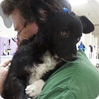 Adopt A Pet :: Marcel - Encinitas, CA