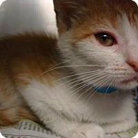 Adopt A Pet :: Sara - Miami, FL
