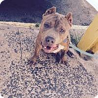 Adopt A Pet :: Murray - Park Ridge, NJ