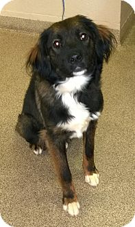 Retriever (Unknown Type) Mix Dog for adoption in Troy, Ohio - Molly