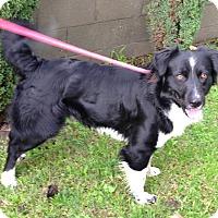 Adopt A Pet :: CUPID - San Pedro, CA