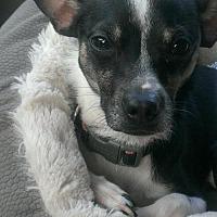 Adopt A Pet :: Joey - Awesome Boy! - Seattle, WA