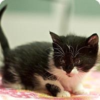Adopt A Pet :: Bink - Great Falls, MT