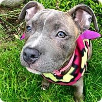 Adopt A Pet :: Prim - Eugene, OR
