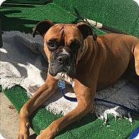 Adopt A Pet :: Kai - Burbank, CA
