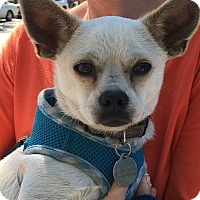 Adopt A Pet :: Harry - Pleasanton, CA