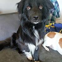Adopt A Pet :: Taylor - Huntsville, AL