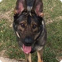 Adopt A Pet :: Tia - Fort Worth, TX