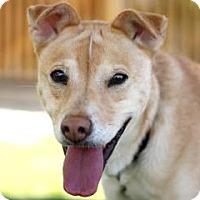 Adopt A Pet :: JOJO - Kyle, TX
