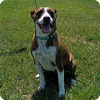 Adopt A Pet :: Tia - Lancaster, PA