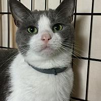 Adopt A Pet :: Sable - Greensburg, PA