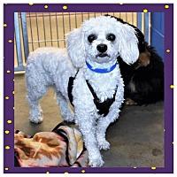Adopt A Pet :: Sparky - San Jacinto, CA