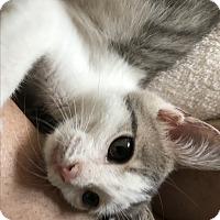 Adopt A Pet :: Josie - Apex, NC