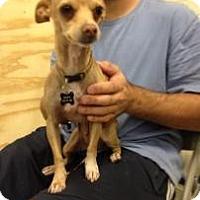 Adopt A Pet :: Ryan - Tucson, AZ