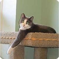 Adopt A Pet :: Max Parker - Port Republic, MD