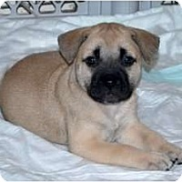 Adopt A Pet :: Millie - Minneola, FL