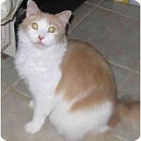 Adopt A Pet :: Charles - Catasauqua, PA