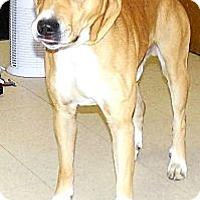Adopt A Pet :: Rex - Washington Court House, OH