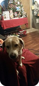 Basset Hound Mix Dog for adoption in South Park, Pennsylvania - Pete