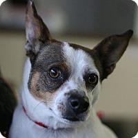 Adopt A Pet :: Lucky - Canoga Park, CA