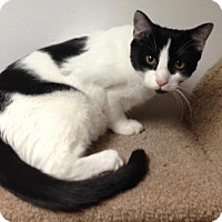 Adopt A Pet :: Lyanna - River Edge, NJ