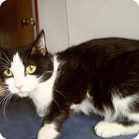 Adopt A Pet :: MARA - Medford, WI