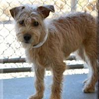 Adopt A Pet :: Rory - Peoria, AZ