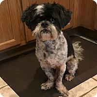 Adopt A Pet :: Prince - Oviedo, FL