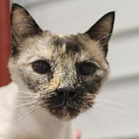 Adopt A Pet :: Pearl - Park City, UT