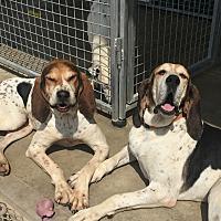 Adopt A Pet :: Annie - Tioga, PA