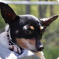 Adopt A Pet :: Lilac - Mt Gretna, PA