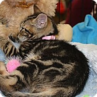 Adopt A Pet :: Hazel - Vero Beach, FL