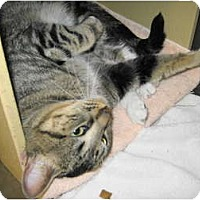 Adopt A Pet :: Wiley - Warminster, PA