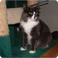 Adopt A Pet :: Heratio - Howell, NJ
