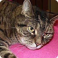 Adopt A Pet :: Snickers (LE) - Little Falls, NJ