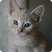 Adopt A Pet :: Mr . Magoo - Canoga Park, CA