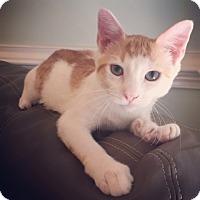 Adopt A Pet :: Sparky - Raleigh, NC