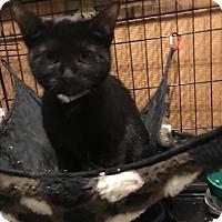 Adopt A Pet :: Pepper - Bedford Hills, NY