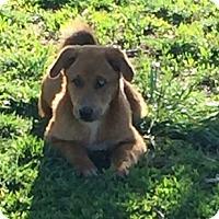 Adopt A Pet :: Rascal - Rancho Cucamonga, CA