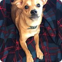 Adopt A Pet :: Penny - Longview, TX