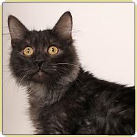 Adopt A Pet :: Thrilla - Glendale, AZ