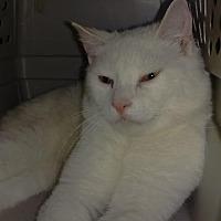 Adopt A Pet :: Jesse - Brainardsville, NY
